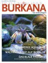 No_41_Final_Burkana_web